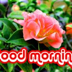 128+ Nice Good Morning Images HD Download