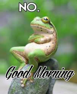 Funny Good Morning Images Pictures Download