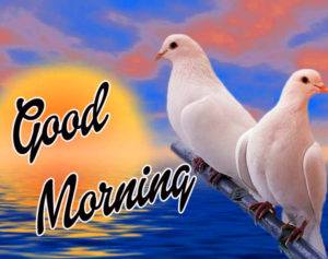 Happy Morning Images Photo Download