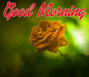 Happy Morning Images Wallpaper Free Download