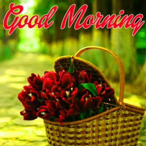Happy Morning Images Pics Free Download