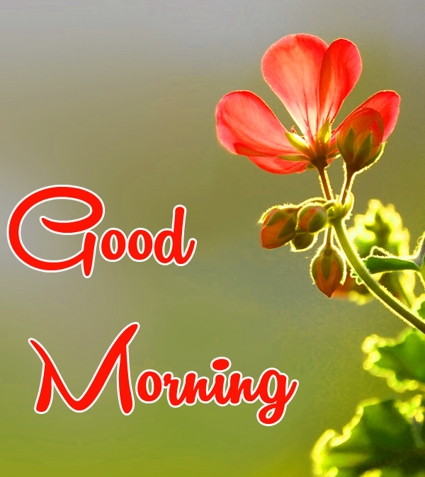Very Nice Special Good Morning Images Free Download