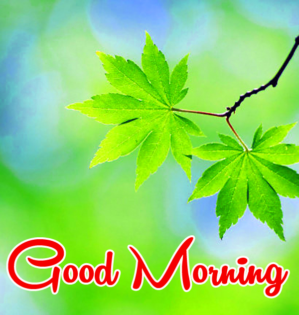 Very Nice Special Good Morning Images HD Download