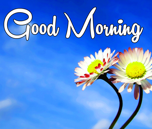Very Nice Special Good Morning Wallpaper Pics With Flower