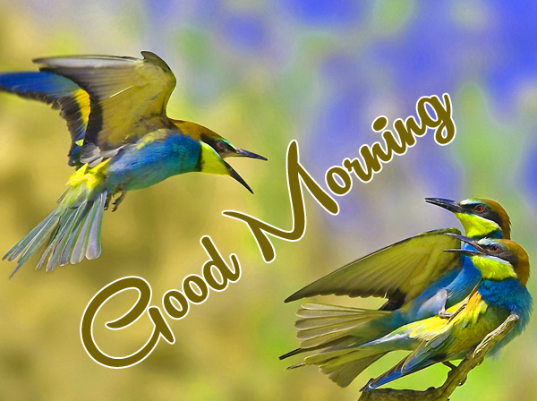 Very Nice Special Good Morning Pics Download