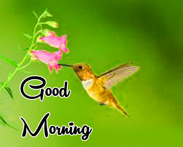 Very Nice Special Good Morning Wallpaper Download