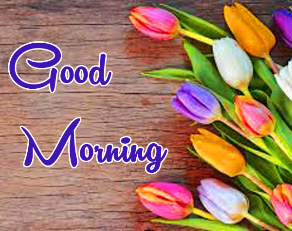 Very Nice Special Good Morning Wallpaper With Flower
