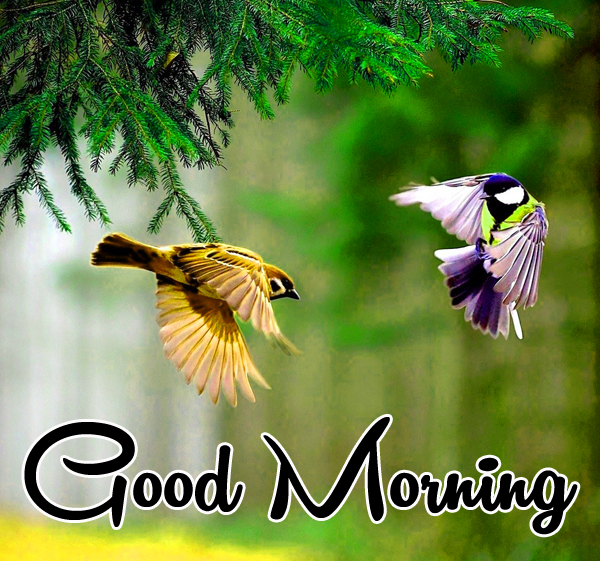 Very Nice Special Good Morning Pics photo Download