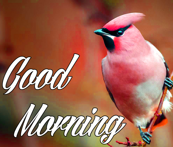 Good morning Images for Mobile