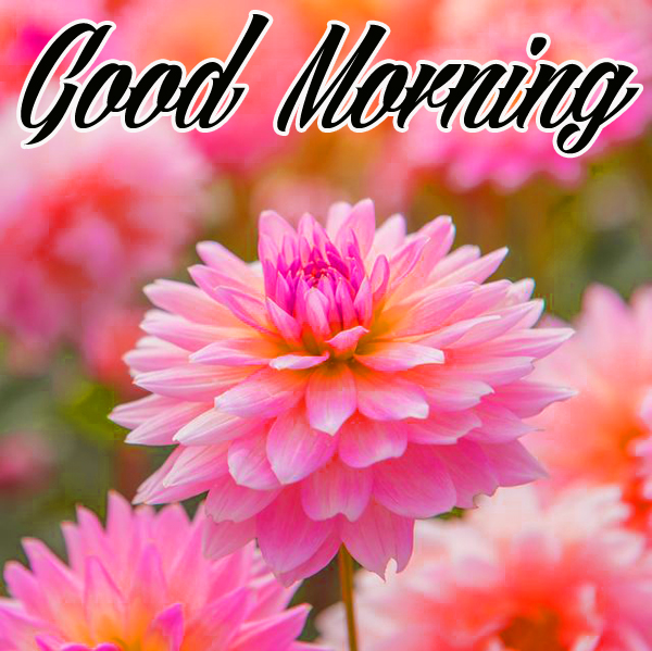 Good morning Images for Mobile ,Good morning Images for Mobile Wallpaper , Good morning Images for Mobile Pics , Good morning Images for Mobile Photo Download