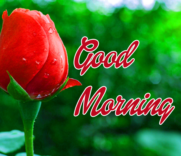 356 Hd Good Morning Wishes Images Wallpaper 2019 Download