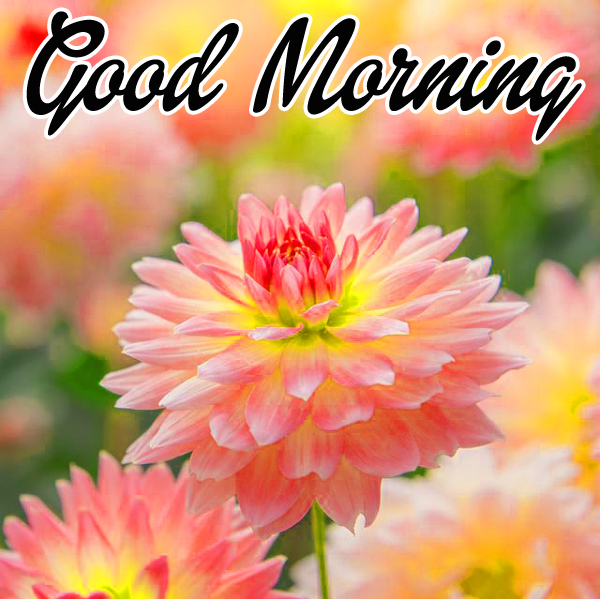 Good Morning Wishes Photo Download