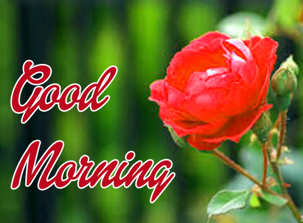 Good Morning Wishes Images With Red Flower