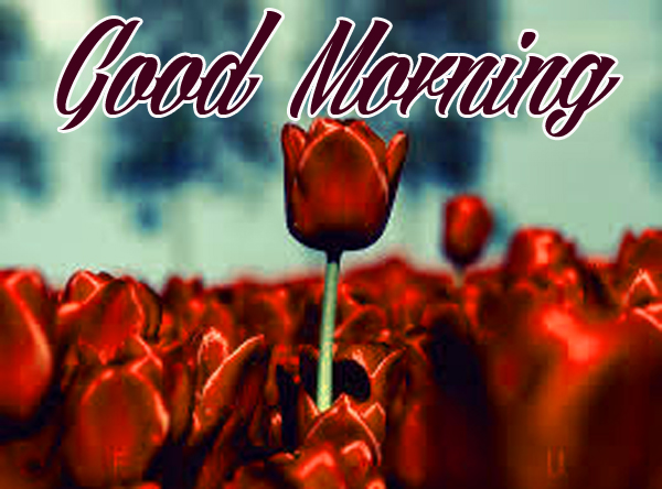 Good morning Images for Mobile Pictures Free Download
