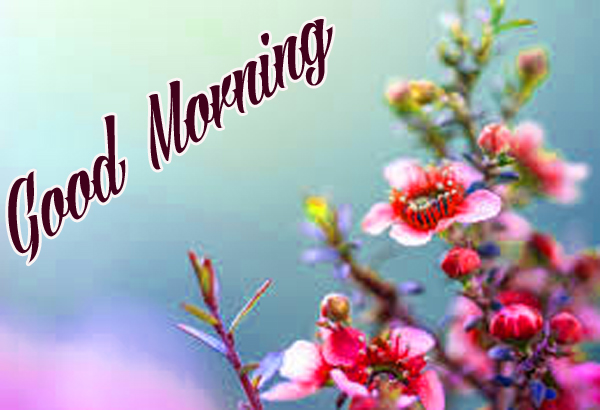 Good morning Images for Mobile Pics Free Download