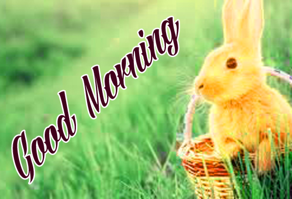 Good morning Images for Mobile Pohto for Whatsapp
