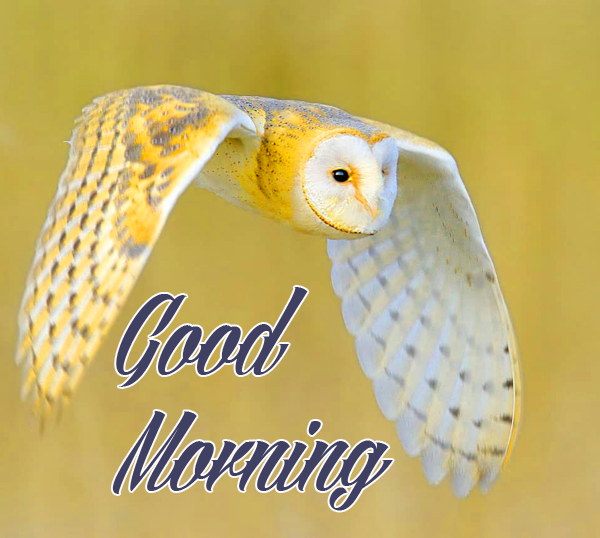 Good morning Images for Mobile Pics Download