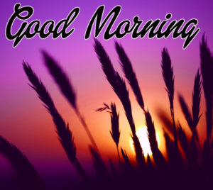 Amazing Good Morning Images Photo Download