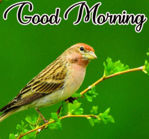 Wonderful Good Morning Images HD Download