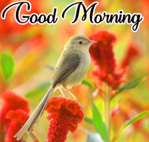 Wonderful Good Morning Wallpaper Pics Free Download