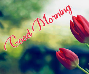 Wonderful Good Morning Pics Wallpaper With Flower