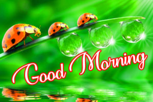 Wonderful Good Morning Pics Download