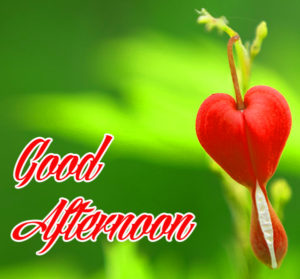 Good Afternoon Images , Good Afternoon Images Pics , Good Afternoon Images Wallpaper , Good Afternoon Images Photo Download