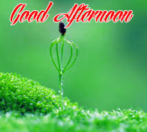 Good Afternoon Images Wallpaper Download