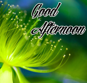 Good Afternoon Image Wallpaper Free Download