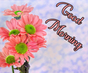 452 Beautiful Good Morning Images Download For Whatsapp In Hd