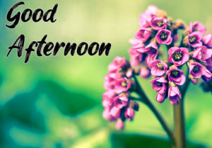 Good Afternoon Images Pictures Free Download