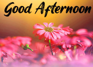 Good Afternoon Images Photo Pic Download