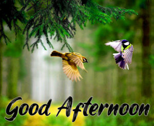 Good Afternoon Images Pics Download & Share