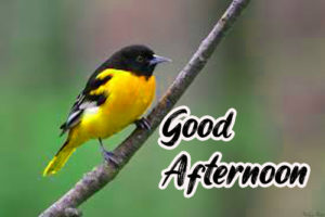 Good Afternoon Pictures Free Download