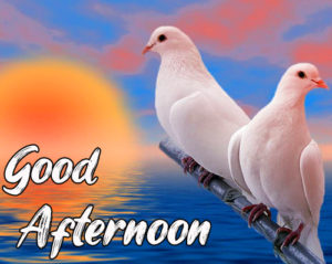 Good Afternoon Pics for Lover , Good Afternoon Wallpaper Download