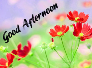 Good Afternoon Pics Free Download