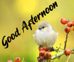 Good Afternoon Wallpaper HD Download