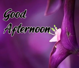 Good Afternoon Images for Whatsapp Download In HD