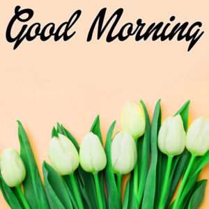 Very Sweet Good Morning Images Wallpaper HD Download