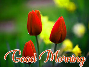 Good Morning Images Pics For Husband Pictures With Flower