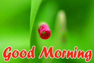 Good Morning Images Pics For Husband photo Download & Share