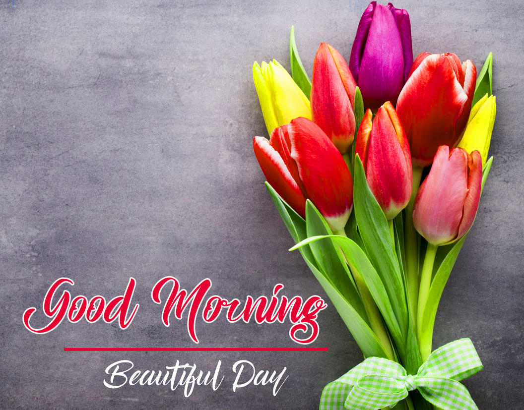 425 Flower Good Morning Images Pics Hd Download