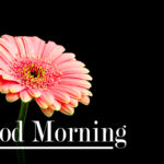 425+ Flower Good Morning Images Pics HD Download