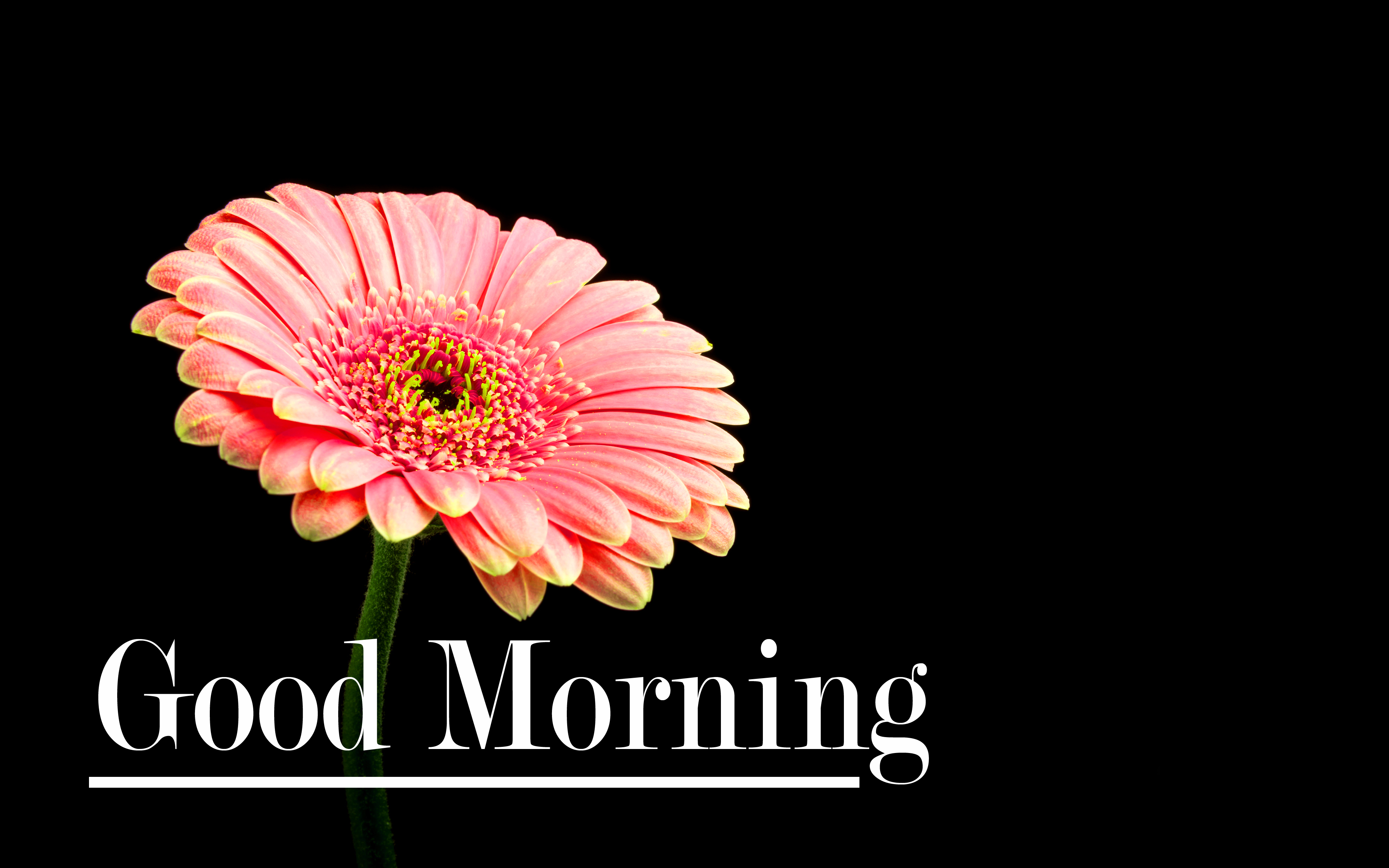 Flower Good Morning Pics Download In HD