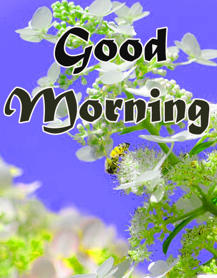 Nature-Good-Morning-Images-8
