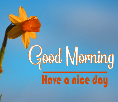 Amazing Good Morning Images pics photo download