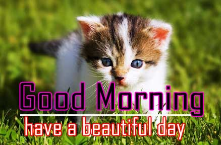 Animal Good Morning Pictures HD