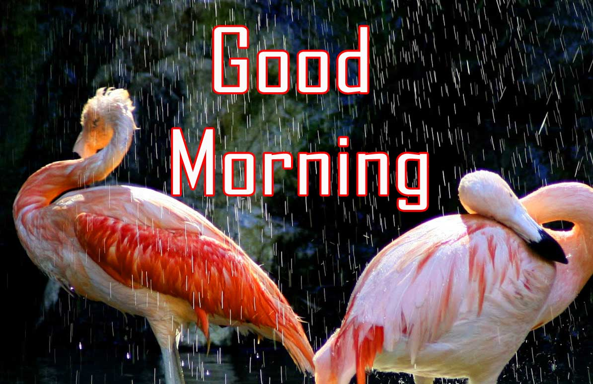 Animal Good Morning Images In HD
