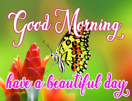Butterfly Good Morning Wallpaper Free
