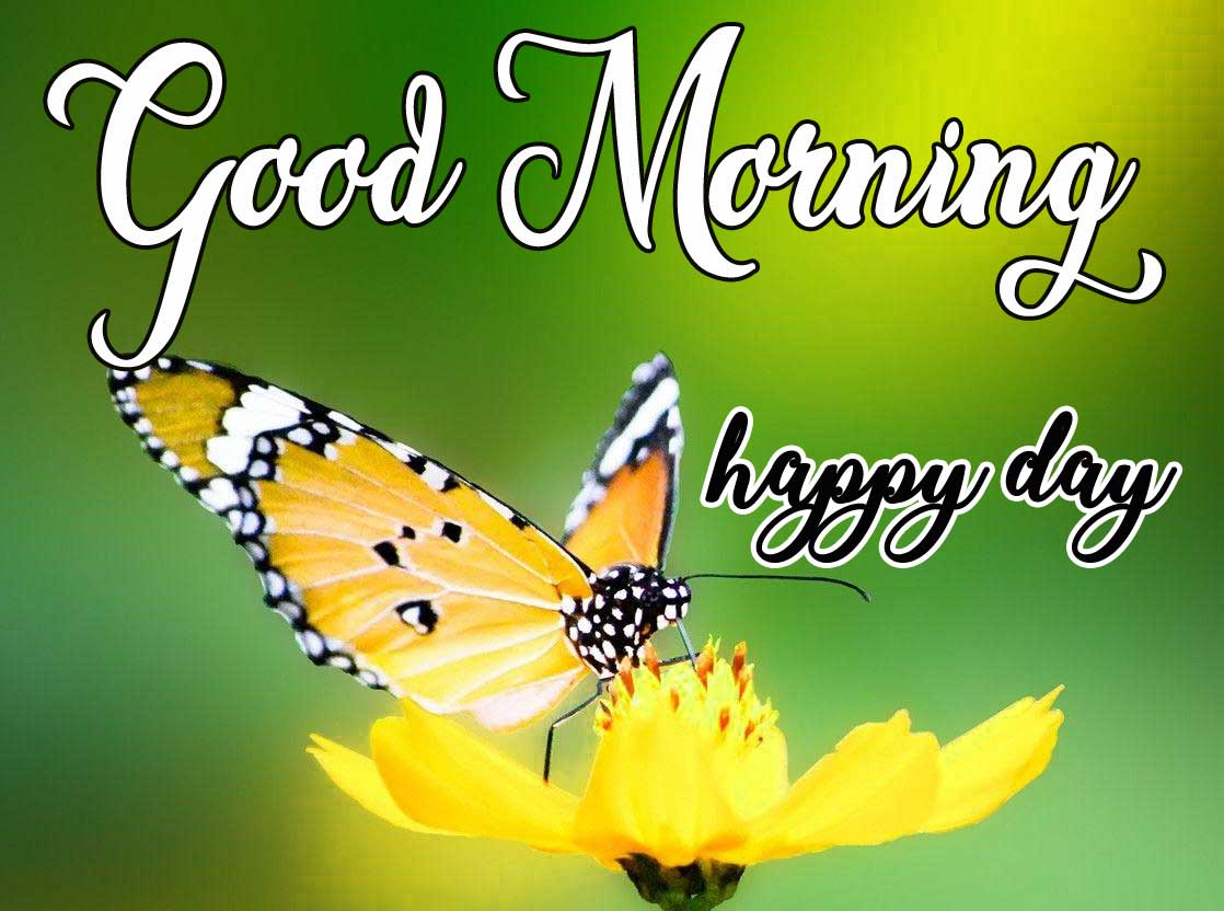 Butterfly Good Morning Images HD
